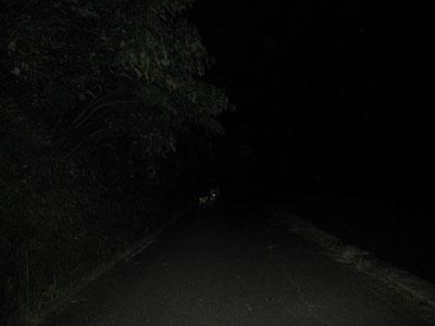夜の散歩で語り合うパパとゴン太。肝試しじゃないってば。