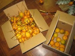 橙をくくる