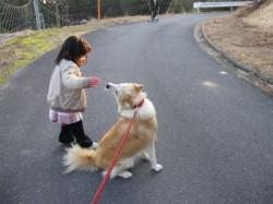 リリコと犬